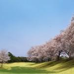 桜の季節Ⅱ