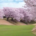 桜の季節Ⅴ